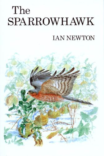 Newton: The Sparrowhawk