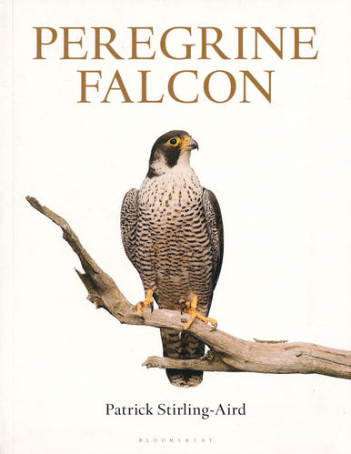Stirling-Aird: Peregrine Falcon