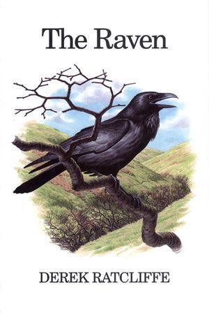 Ratcliffe: The Raven