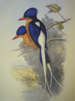 Gould : Birds of Australia : Supplement - All Species Discovered after Volumes I - VII
