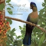 Connop : Birdsongs of South Africa :