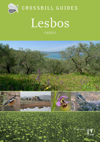 Tabak: Crossbill Guide Lesbos - Greece
