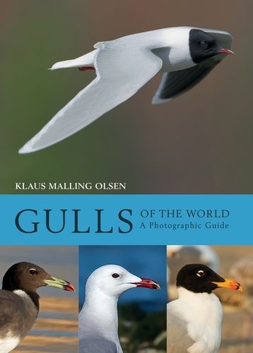 Malling Olsen: Gulls of the World - A Photographic Guide
