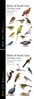Rasmussen, Anderton : Birds of South Asia : The Ripley Guide: Volume 1: Field Guide, Vol. 2 Morphology, distribution, vocalizations and taxonomy