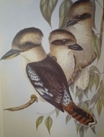 Gould : Birds of Australia : Volume II - Frogmouth, Swallows, Swifts, Martins, Bee-Eaters, Pardalotes, Crow-Shrikes, Fly-Catchers, Kingfishers