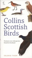 Thom : Scottish Birds :