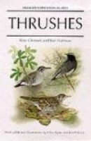 Clement: Thrushes