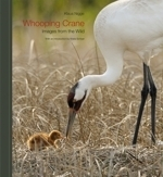 Nigge : Whooping Crane : Images from the Wild