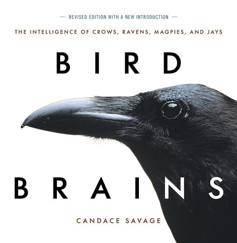 Savage: Bird Brains - The Intelligence of Crows, Ravens, Magpies, and Jays