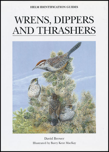 Brewer, Illustr.: MacKay: Wrens, Dippers and Thrashers