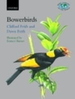 Frith, Frith, Barnes (Illustr.), McGuire (Sonogramme) : The Bowerbirds : Ptilonorphychidae