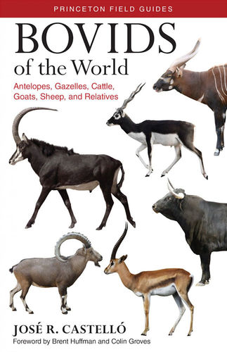 Castelló. Bovids of the World - Antelopes, Gazelles, Cattle, Goats, Sheep, and Relatives